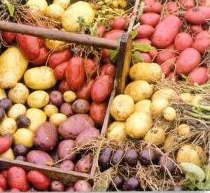 potatoesBackground